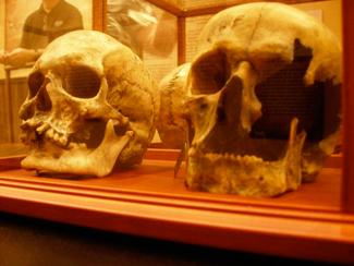New Skulls