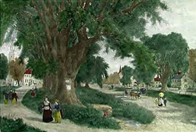 Village Elms